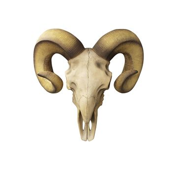 Large Natural Ram Skull