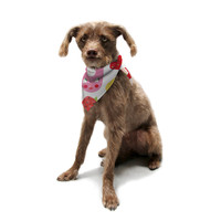 "Jane Smith ""Summer Repeat"" White Red Pet Bandana"