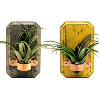 Set of 2 Small Air Plant Vases (Pictured in Slate and Mustard) Wooden Home Decor Air Plant Holder Wall Vases Rustic Miniature Vases