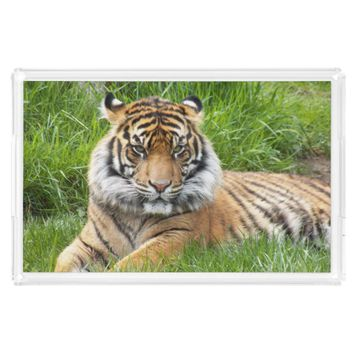Sumatran Tiger Photo Serving Tray