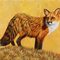 Red Fox Painting - Looking Back Print By Crista Forest