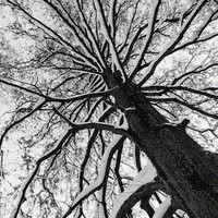 Tree Photo black & white abstract fine art print top by ImagesByCW