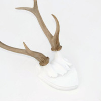 Large Faux Deer Antler Mount - White Plaque With Natural Antlers  - Unique Fake Resin Decor - Animal Friendly Wall Art - HT0100