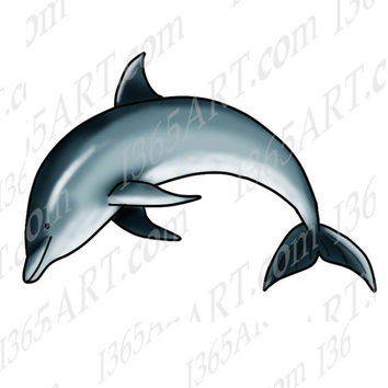 Digital Jumping Dolphin Animal Clipart Illustration, Includes Line art & coloring page, Digital Stamp, 8x8 JPEG PNG Print instant Download
