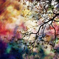 the Tree of Many Colors Art Print by Caleb Troy | Society6