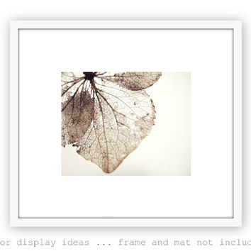 Botanical Print - Minimal Nature Wall Art - Neutral Naturalist - Fine Art Photography