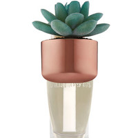 POTTED SUCCULENTWallflowers Fragrance Plug