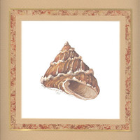 "Top Shell 10"" x 10"" custom matted lithograph"