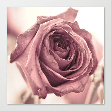Dusky Rose fine art photography botanical print wall decor modern home accent square cottage shabby chic pink flower vintage gifts under 50