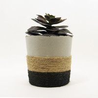 Succulent Planter, Concrete Planter, Succulent Pot, Indoor Planter, Modern Planter, Gold Planter, Air Plant Holder, Cement Planter, Rustic