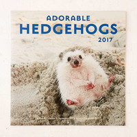 2017 Adorable Hedgehogs Wall Calendar - Urban Outfitters