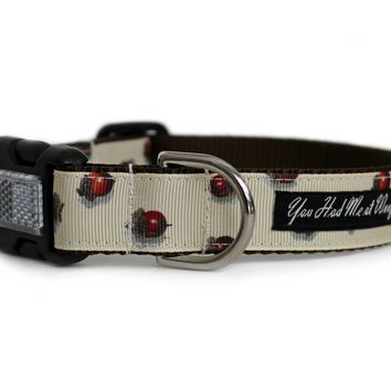 Acorns in the Fall Dog Collar
