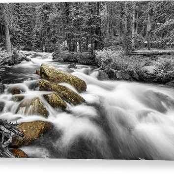 Rocky Mountain National Forest Stream Bwsc Canvas Print
