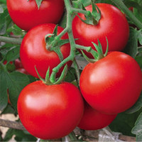 Fresh red tomato seed Wang 500 seeds healthy vegetable