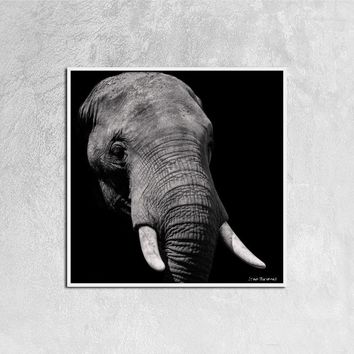 Black and White Elephant Stretched Canvas, 12ⅹ12 inch