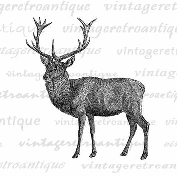 Printable Digital Deer Graphic Download Printable Deer Illustration Deer Image Animal Artwork Antique Clip Art Jpg Png Eps HQ 300dpi No.2107
