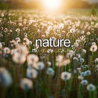dandelions, field, just girly things, nature - inspiring picture on Favim.com