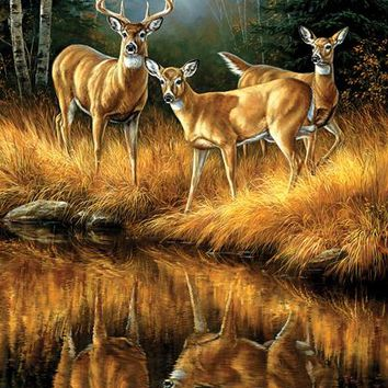 Whitetail Reflections 550pc Jigsaw Puzzle