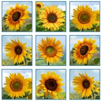 Elizabeth's Studio, Sunflowers Panel, White