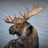"""Moose Drool"" Gallery Metal Float photography by Ryan Smith"
