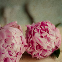 French country decor, pink, peony, flower wall art, cottage style, romantic, beige, book pages, floral art, fine art print, 8x10 print,