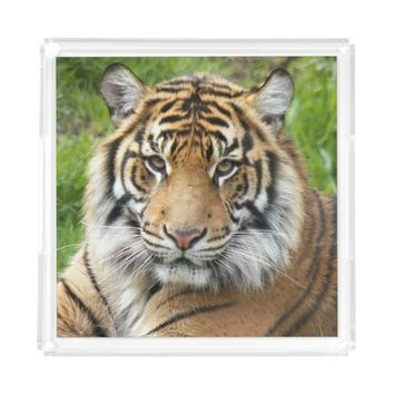 Big Cat Tiger Photo Serving Tray