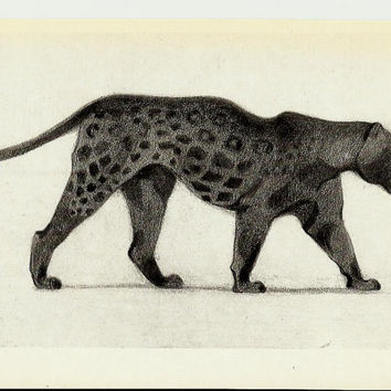 Black Panther, Drawing, Illustrations of Animals by Vatagin, Vintage Russian Postcard  unused 1978