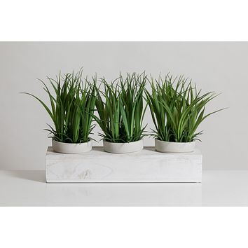 """8"""" Grass in White Wooden Pot - Cacti Collection"""