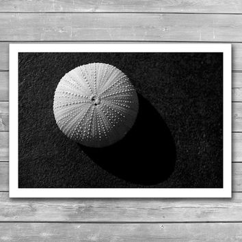 Seashell, Sea Urchin, BW Prints, Black and White Photography, Mollusk, Minimal Art Photo, Minimalizm, Abstraction, Photo Print, Giclee Print