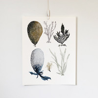 Sea Botanicals 1 11x14 print by KatieVernon on Etsy