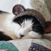 pet hat  bear by xmoonbloom on Etsy