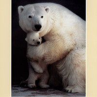 Bear Hug Print by Rick Egan at Art.com