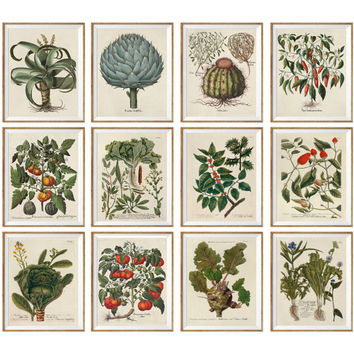 Set of 12. Antique Botanical Illustrations 1640-1900 poster set, Botanical Vintage Art Prints, pictures drawings set, green room decor *20*