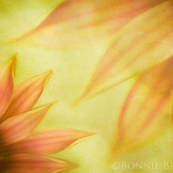 Nature Photography - Two Gerberas fine art print - home decor - bedroom decor - floral wall decor