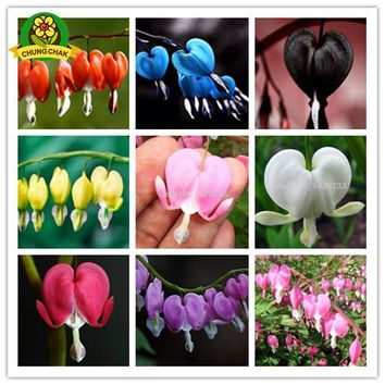 2018 HOT SALE 200pcs Bleeding Heart Flower Seeds Dicentra spectabilis Sweet Hearts Wallet Peony Flower Home Garden Plant