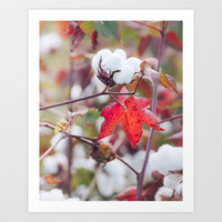 Cotton Field Collection By Andrea Anderegg Photography | Society6
