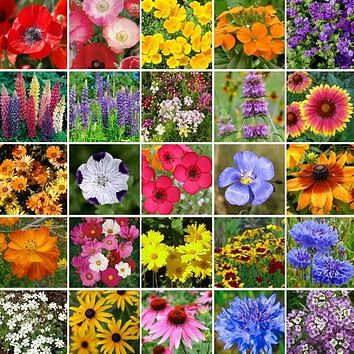Wildflower Southeast Mix Seeds (7g+Seeds)