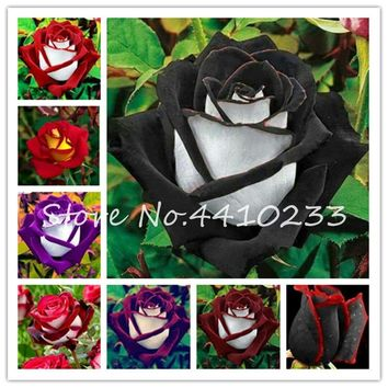 50 Pcs/bag Amazingly Beauty Rose Bonsai Flower With Red Edge Seedling Rare Color Popular Garden Perennial Bush Or Bonsai Flower