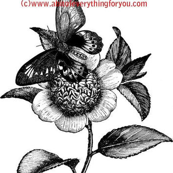 butterfly on flower art printable clipart png digital download image graphics bugs insects digital stamp black and white