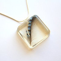 Beautiful Blue Jay Feather in Glass like Resin cube- Very Rare. Strung on Sterling Silver Snake Chain- 18 inches.
