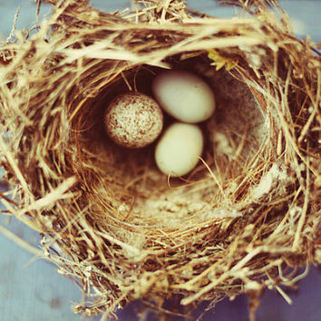 nature, nest, bird, eggs, fine art photography