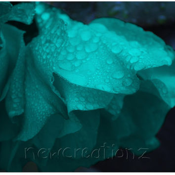 Turquoise Rose printable art with raindrops - nature print photography wall art 8x10, 10x10, 16x20, 11x14, 20x30