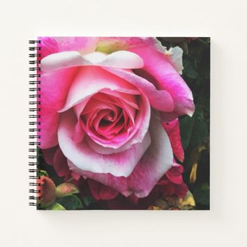 Beautiful Pink Rose with Buds Notebook