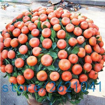20PCS Climbing Orange Seeds Mini Potted Edible Fruit Seeds Bonsai China Top Quality Climbing Orange Tree Seeds Climbing Plants