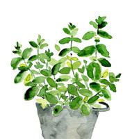 Mint plant in a tin planter, original watercolor painting, herb, kitchen decor, mothers day, wall decor,  Cottage chic, mint, grey