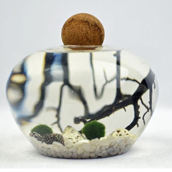 Mario Terrarium - Japanese Moss Ball Aquarium - cork topped glass vase  - sea fan - shells