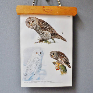 Vintage Owl Book Plate - Woodland Book Page