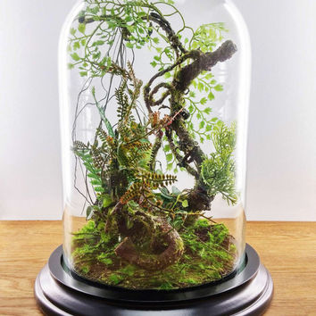 Forest terrarium of artificial plants, Cabinet of curiosity, dome Bell glass, anniversary gift wedding, Garden decoration