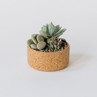 Melanie Abrantes — Small Cork Planter