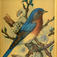 Framed Bluebird Print - Vintage Wall Decor - Bird Picture